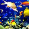Excel Akvaryum Balık Uyum Programı